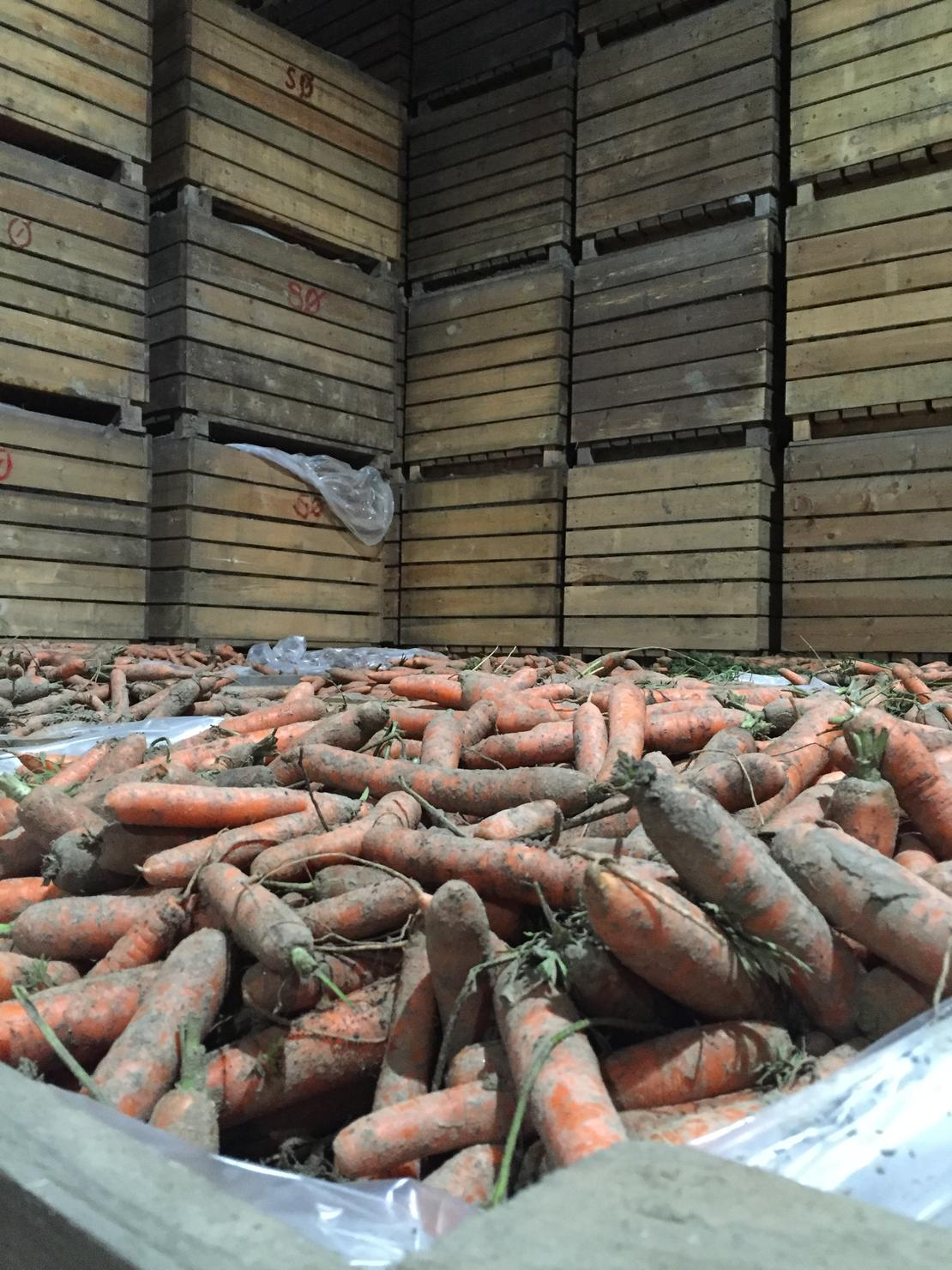 Riktig lagring av gulrøtter